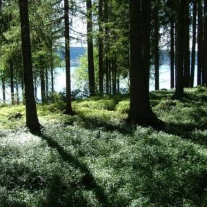 Skogen. Frakt tillkommer